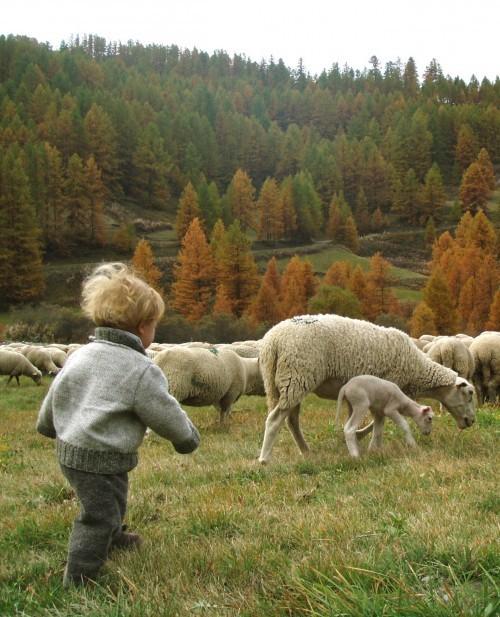 bbé à la rencontre des animeaux de la ferme